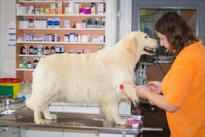Móri Állatorvosi Rendelő