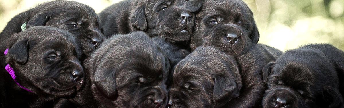 Petfriend - Móri Állatorvosi Rendelő